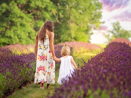 Lavender Field Mini Sessions