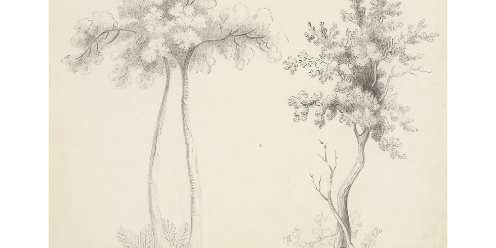 Sketching the Soul of a Tree