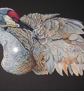 Sandhill Crane 16 X 20 watercolor $270 b