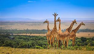 Masai-Mara-Wildlife.jpg