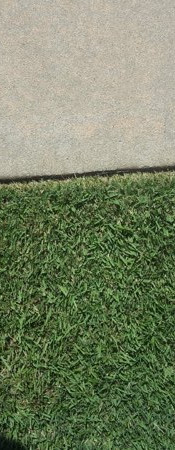 attention to detail lawn care