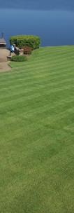 custom lawn care