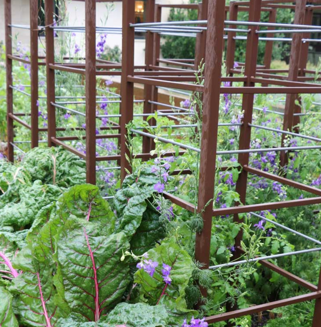 tomato cages