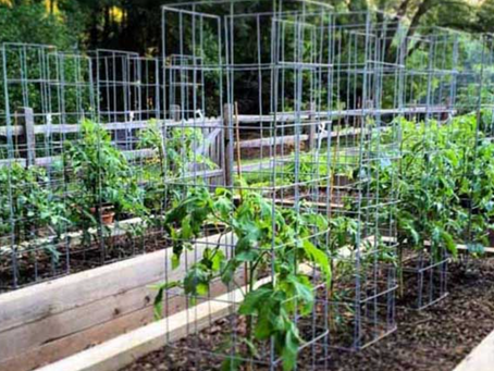 Common Questions - Raised Beds