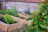raised beds Southern Roots