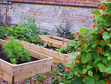 10 reasons to use raised beds
