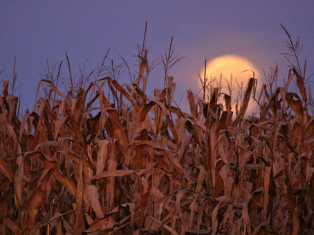 WHAT IS THE HARVEST MOON?