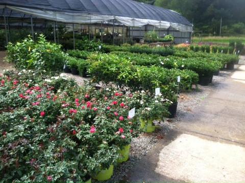 Southern Roots Nursery.jpg