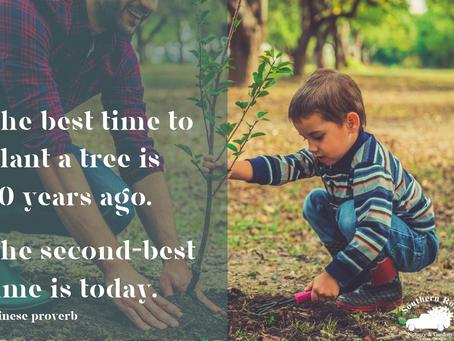 Five Key Steps for Planting Trees & Shrubs Like the Pros