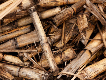 Croatia to terminate biomass supply agreements