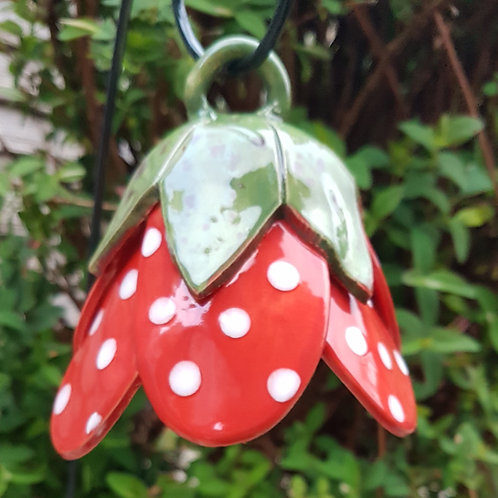 Spotty Red Bell Flower