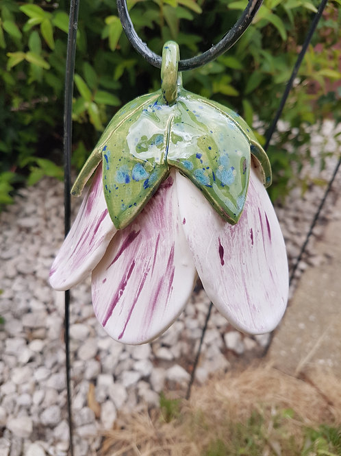 White/Purple Stripe Bell Flower