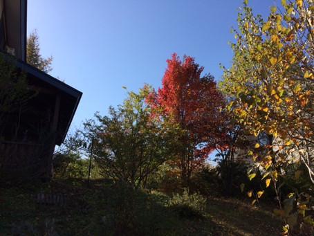 木島平は秋の味覚満載!