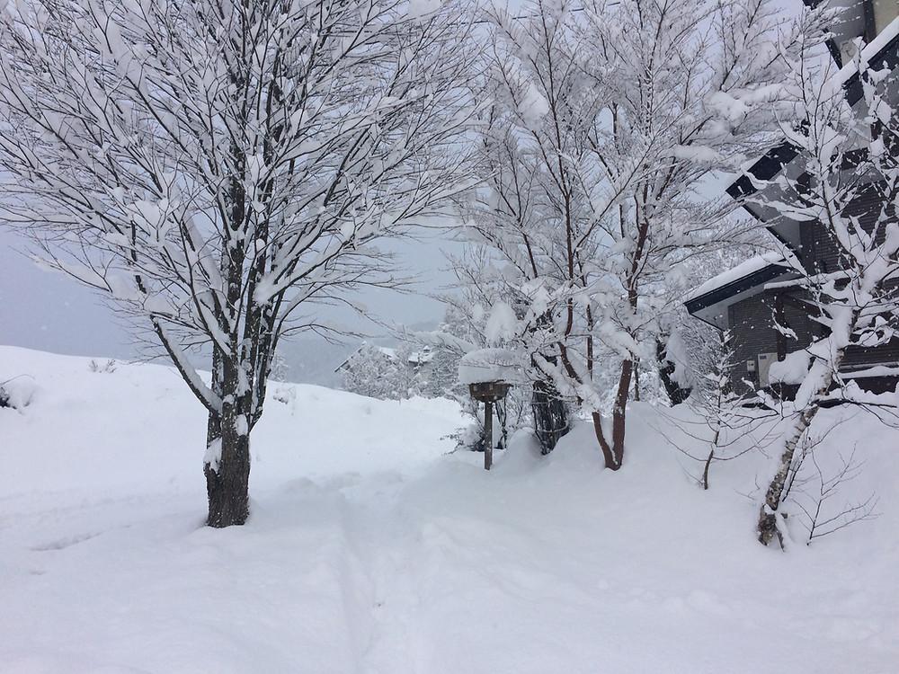 2018/12/15 雪景色