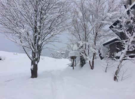 スキーシーズン到来!