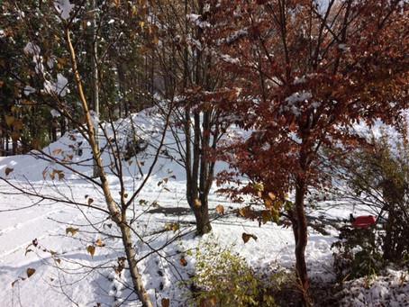 里に初雪・・本雪?