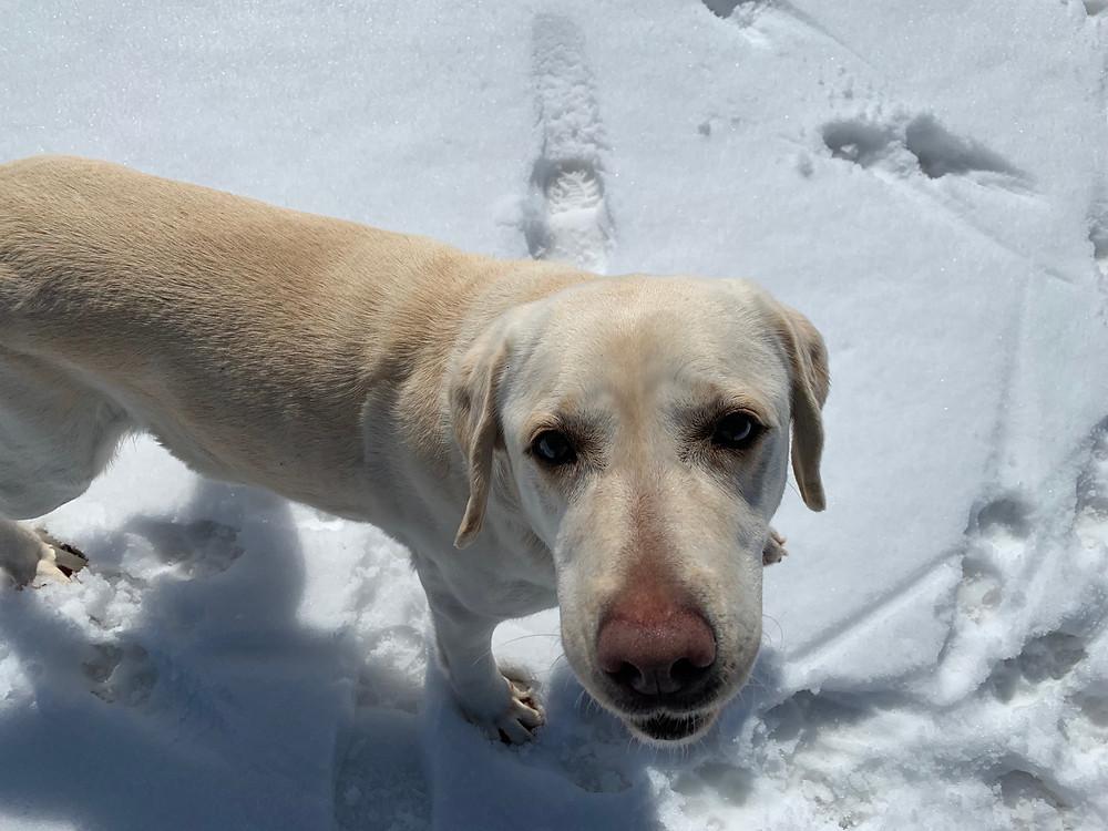 雪遊びのメアリ