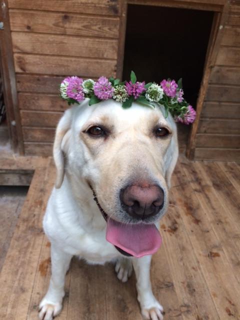 ケイトとレンゲの花飾り