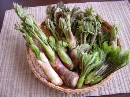 採りたて山菜