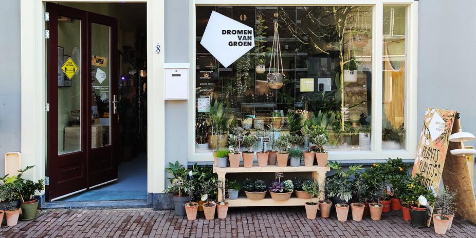 Winkel Dromen van Groen Gouda