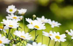 letnie-cvety
