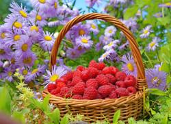 food-flowers-garden-fruit-berries-basket-raspberries-autumn-flower-plant-flora-produce-lan