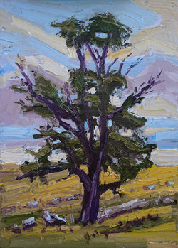 Purple blue sky with tree
