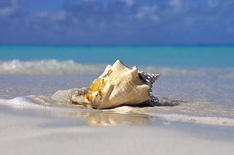 Seashell on beach.jpg