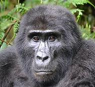 gorilla%20Holiday%20bazaar_edited.jpg