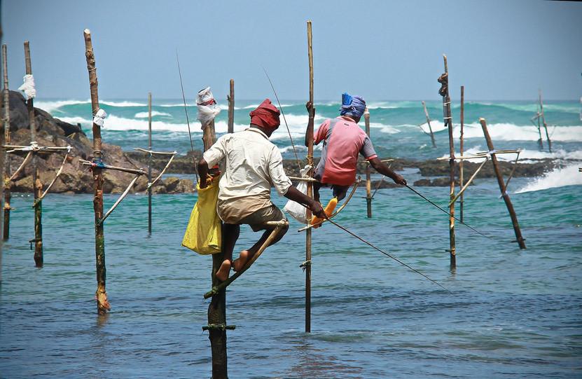 stilt fishermen in weligama sri lanka