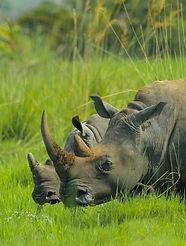 rhino%20Holiday%20bazaar_edited.jpg