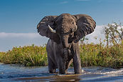 elephant  holiday bazaar