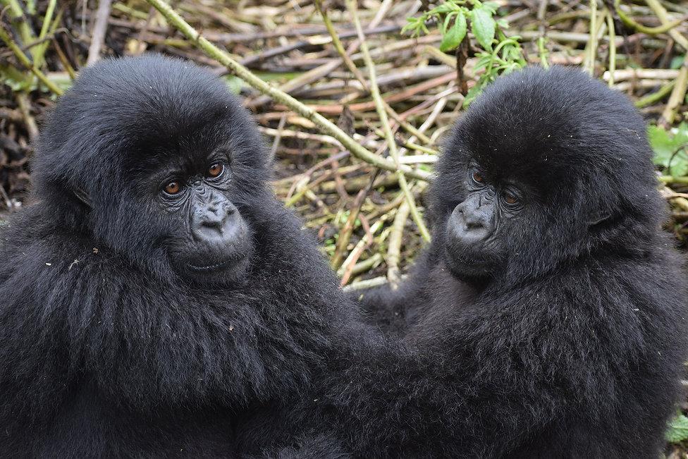 mountain-gorilla Holiday bazaar
