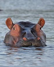 Hippo%20holiday%20bazaar_edited.jpg