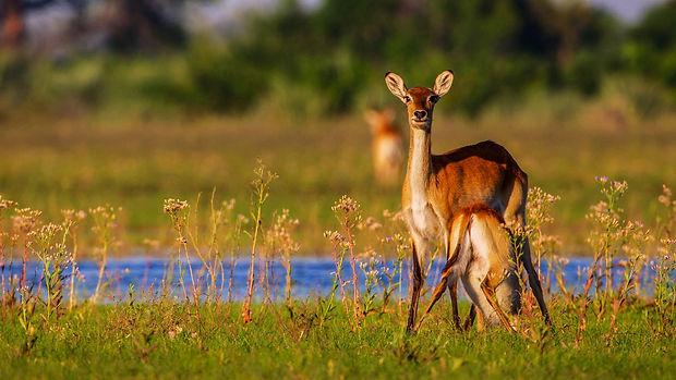 Botswana Okavango Delta  holiday bazaar
