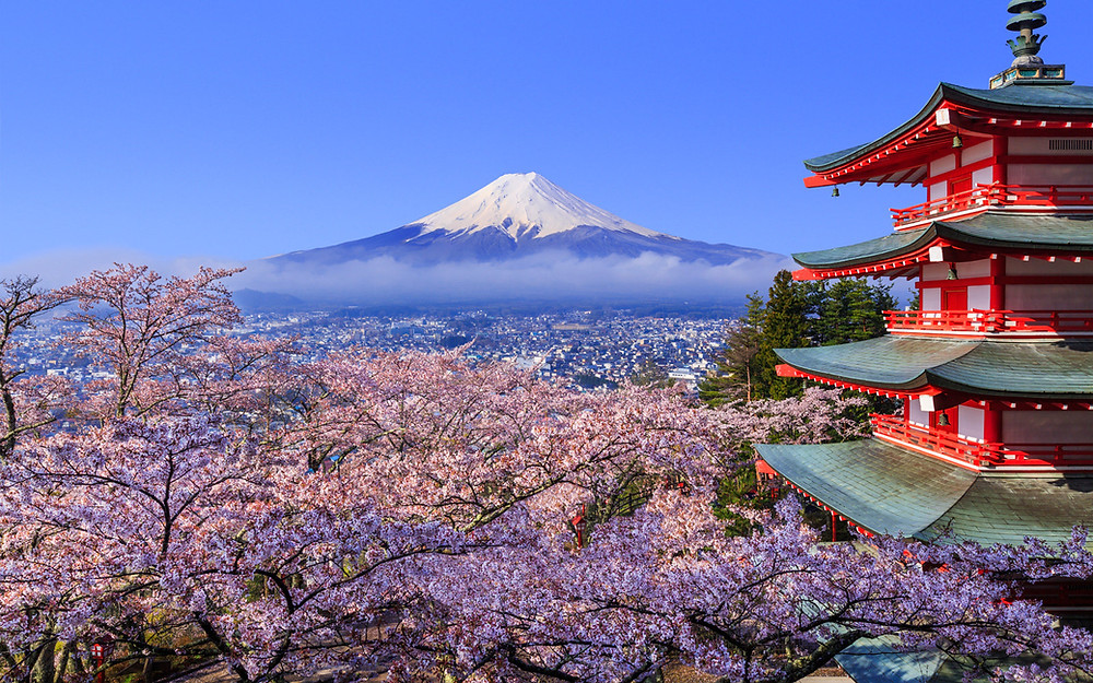 Image result for cherry blossom in japan