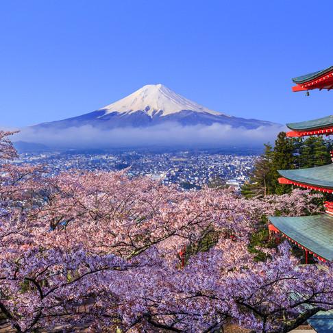 Japan's magical Cherry Blossom Season