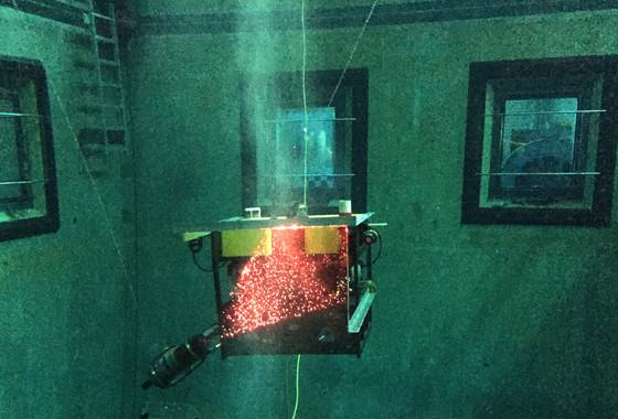 Pinky-sized marine animal breaks record for ocean filtration - Seeker