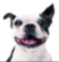 Portrait dog.jpg