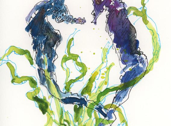 seahorse_color.jpeg
