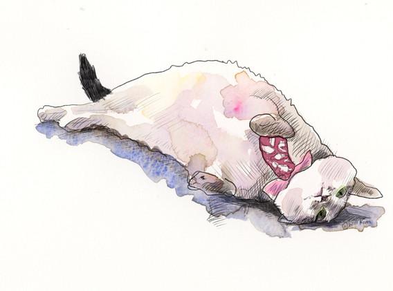cat_tlc_sns.jpg
