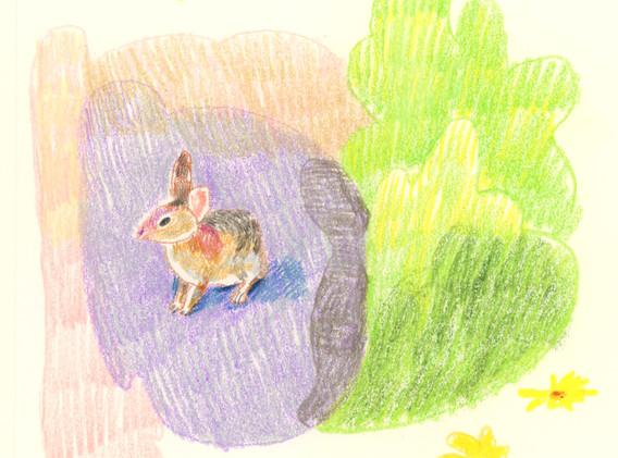 bunny camping-fin.jpg