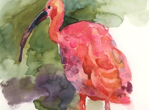 scarlet ibis-03.jpg