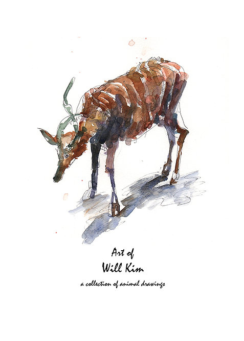 Art of Will Kim - a collection of animal drawings