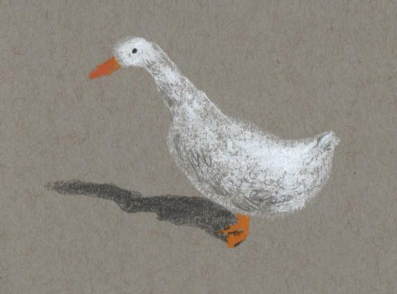 duck-w-001.jpg