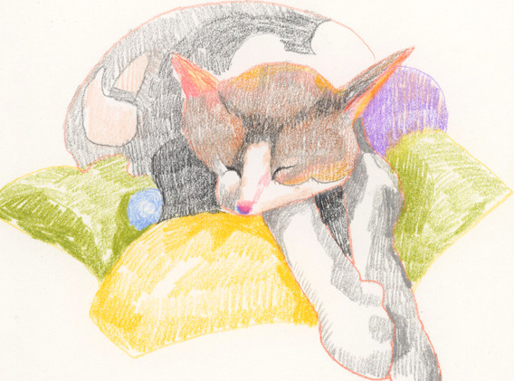 cat-pinknose.jpeg
