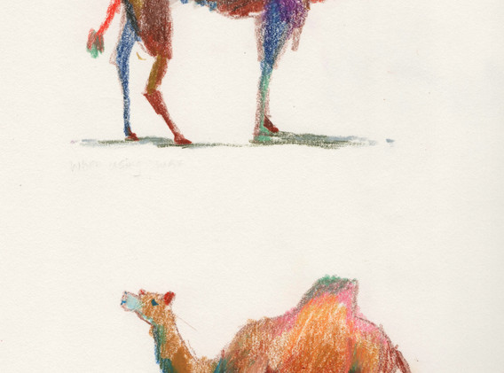 camel-005.jpg