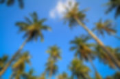 palm-trees-sky.jpg