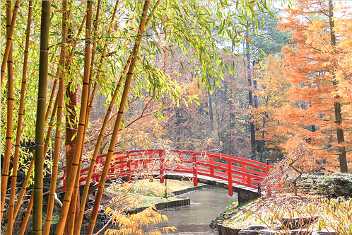 Bridge in Autumn