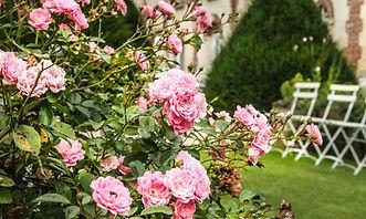 roses domaine